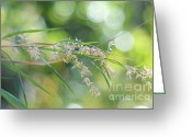 Impressions Greeting Cards - Waterfall of Lights. Grass Art Greeting Card by Jenny Rainbow