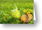 Growing Water Greeting Cards - Watering can in the grass Greeting Card by Sandra Cunningham