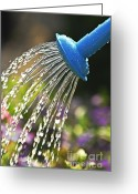 Flowerbed Greeting Cards - Watering flowers Greeting Card by Elena Elisseeva
