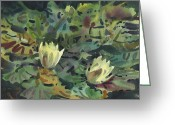 Waterlilies Greeting Cards - Waterlilies Greeting Card by Donald Maier