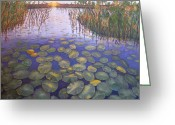 Lilly Pad Painting Greeting Cards - Waterlillies South Africa Greeting Card by Karen Zuk Rosenblatt
