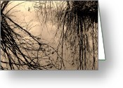 Overflowing Greeting Cards - Waters Edge Greeting Card by The Forests Edge Photography