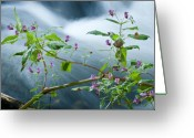 Cataclysm Greeting Cards - Waterscapes - Lilac blossom Greeting Card by Andy-Kim Moeller