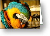 Talking Birds Greeting Cards - Waving for Peanuts Greeting Card by Rene Triay Photography