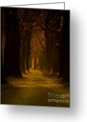 Fantasy Pyrography Greeting Cards - Way in the Forest Greeting Card by Zafer GUDER