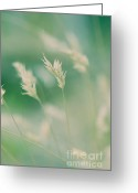 Wayside Greeting Cards - Wayside grass - colour Greeting Card by Hideaki Sakurai