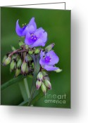 Florida Flowers Greeting Cards - We Three Greeting Card by Sabrina L Ryan