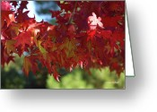 Red Leaves Greeting Cards - Wearing Red For Fall Greeting Card by Donna Blackhall
