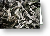 Olympic National Park Greeting Cards - Weathered roots - Sitka Spruce tree Hoh Rain Forest Olympic National Park WA Greeting Card by Christine Till