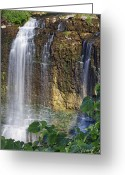 Escarpment Greeting Cards - Webster Falls Greeting Card by Phill  Doherty