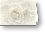 Pastel Roses Greeting Cards - Wedding Day White Roses Greeting Card by Jennie Marie Schell