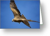Bird Of Flight Greeting Cards - Wedgetail Eagle Flight Greeting Card by Mike  Dawson