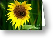 Trish Greeting Cards - Wee Bee Greeting Card by Trish Clark