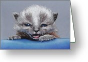 Kitten Pastels Greeting Cards - Wee Kitten Greeting Card by Pamela Humbargar