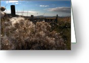 Shelter Prints Greeting Cards Greeting Cards - Weeds Greeting Card by Paul  Mealey