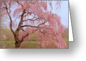 Easter Flowers Greeting Cards - Weeping Spring- Holmdel Park Greeting Card by Angie McKenzie