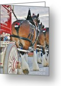 Carriage Team Greeting Cards - Weiser Greeting Card by Lynda Dawson-Youngclaus
