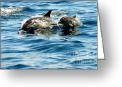 Dana Point Greeting Cards - Welcome  Greeting Card by Johanne Peale