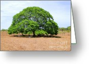 Respite Greeting Cards - Welcome Shade Greeting Card by Al Bourassa