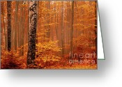 Bulgaria Greeting Cards - Welcome to Orange Forest Greeting Card by Evgeni Dinev