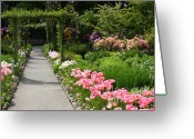Cheering Greeting Cards - Welcome to the Garden Greeting Card by Carol Groenen