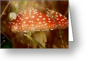 Forest Floor Photo Greeting Cards - Welcome To Wonderland Greeting Card by Odd Jeppesen