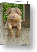 Pig Greeting Cards - Well Hello There Greeting Card by Bob Christopher