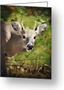 Fall Photographs Greeting Cards - Well Hello There Greeting Card by Kathy Jennings