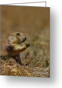 Prairie Dog Greeting Cards - Well I Reckon So Greeting Card by Robert Frederick