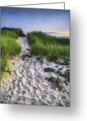 Path Greeting Cards - Wellfleet Beach Path Greeting Card by Tammy Wetzel