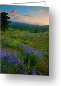 Lupine Greeting Cards - Wenas Valley Sunset Greeting Card by Mike  Dawson