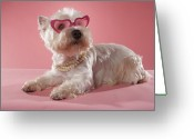 West Highland White Terrier Greeting Cards - West Highland Terrier Wearing Necklace And Glasses Greeting Card by Chris Amaral