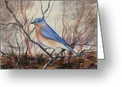  Bluebird Greeting Cards - Western Bluebird Greeting Card by Sam Sidders