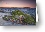 U.s. National Forest Greeting Cards - Western Juniper On Granite Summit Greeting Card by Sebastian Kennerknecht
