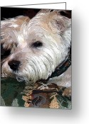 Friend Digital Art Greeting Cards - Westie Greeting Card by Mindy Newman