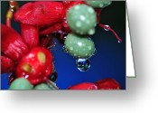 Reflections In Water Greeting Cards - Wet Berries Greeting Card by Kaye Menner