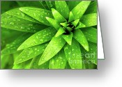 Growing Water Greeting Cards - Wet Foliage Greeting Card by Carlos Caetano