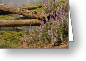 Water Gardens Greeting Cards - Wetland Beauty Greeting Card by Bonnie Bruno