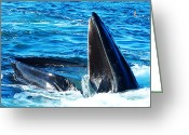 Telephoto Greeting Cards - Whales opening mouth Greeting Card by Mingqi Ge