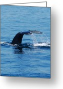  Ocean Greeting Cards - Whales Tale Greeting Card by Lisa Kane