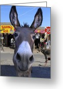 Oatman Greeting Cards - What . . . No Carrots Greeting Card by Mike McGlothlen