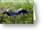 Courting Greeting Cards - What a Wingspan Greeting Card by Sabrina L Ryan