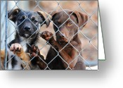 Puppies Greeting Cards - What About Us Greeting Card by Jai Johnson