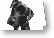 Pit Bull Greeting Cards - What Greeting Card by Amanda Barcon