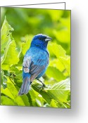 Bird Cards Greeting Cards - What Are You Lookin At Greeting Card by Dick Jones