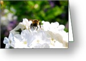 Honey Bee Greeting Cards - What Are You Looking At Greeting Card by Lisa Knechtel