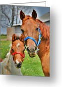 Quarter Horses Greeting Cards - What is Your Name Greeting Card by Emily Stauring
