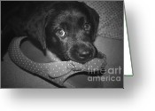 Black Lab Puppy Greeting Cards - What Shoe Greeting Card by Cathy  Beharriell