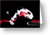 Playful Kitten Greeting Cards - Whats Black And White And Red All Over Greeting Card by Datha Thompson