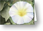Morning Glory Greeting Cards - Whats The Story... Greeting Card by Ken Powers